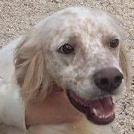 Bildertagebuch - FELICE, landete im Canile mit 1300 Hunden...ZUHAUSE IN ITALIEN GEFUNDEN! 27526088ca