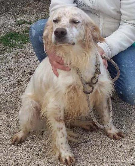 Bildertagebuch - FELICE, landete im Canile mit 1300 Hunden...ZUHAUSE IN ITALIEN GEFUNDEN! 27526090ge