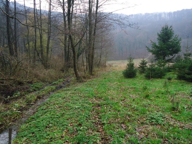 Uzgoj božićnih drvaca 27535618or