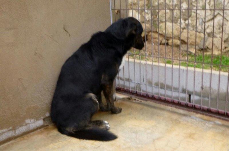 Bildertagebuch - Aramis: sucht dringend liebevolle Familie, er gibt sich langsam auf- VERMITTELT! 27663368rs