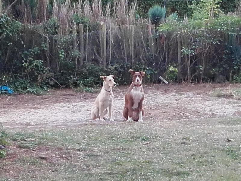 Bildertagebuch -  Kenia: pfiffiges Hunde-Mädel sucht konsequente, liebe und  souveräne Familie! - VERMITTELT - 27702937tw