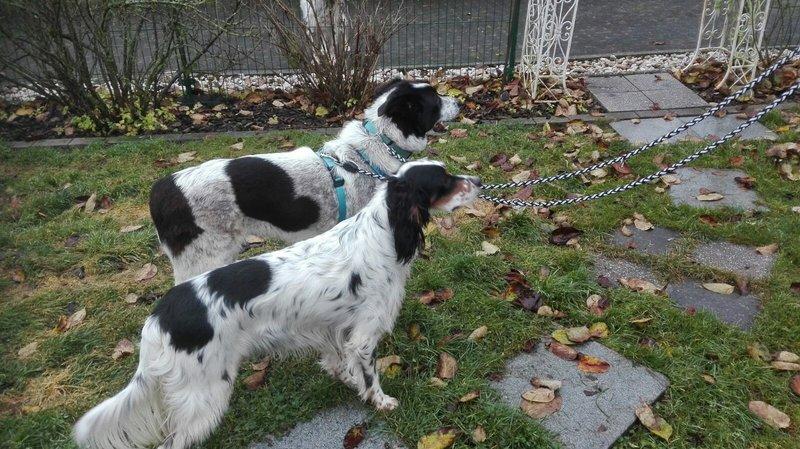 Bildertagebuch - Alwin, ein Junghund vom Pech verfolgt, hofft auf das große Glück...VERMITTELT! 27758474zy