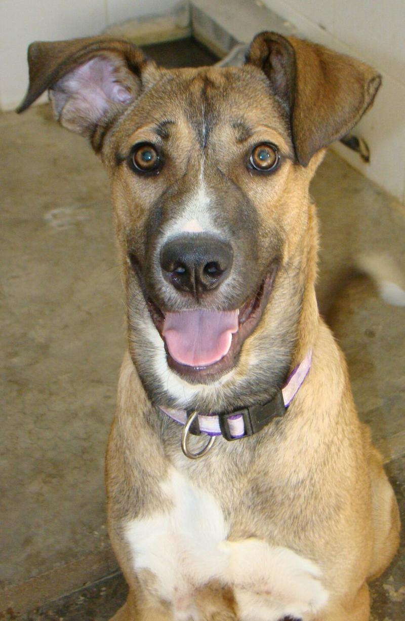 Bildertagebuch - Vago, ein junger lauffreudiger Hundekumpel der noch viel lernen möchte ...  27774628tt