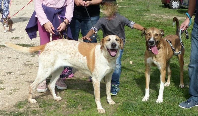 Bildertagebuch - Vago, ein junger lauffreudiger Hundekumpel der noch viel lernen möchte ...  27774630gj