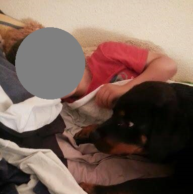 Bildertagebuch -  Boyd: Freundlicher Rottweiler für Kenner und Liebhaber der Rasse- VERMITTELT! 27844797ah
