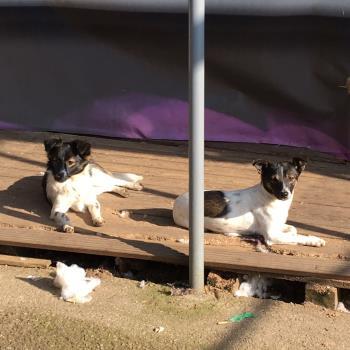 Bildertagebuch -  Virgola: niedliches, kleines Hundemädchen mit viel Witz und Charme sucht Familienanschluß! 27876398js