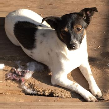 Bildertagebuch -  Virgola: niedliches, kleines Hundemädchen mit viel Witz und Charme sucht Familienanschluß! 27876440on