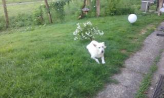 Angel lebte glücklich in Österreich RIP hübsche Maus 27887928eq