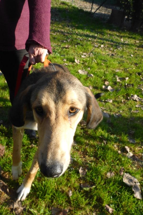 Bildertagebuch - Lisbeth, sanftes freundliches junges Hundemädchen... über andere ORGA ZUHAUSE GEFUNDEN! 27932159sn