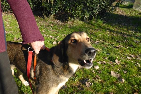 Bildertagebuch - Lisbeth, sanftes freundliches junges Hundemädchen... über andere ORGA ZUHAUSE GEFUNDEN! 27932162cd