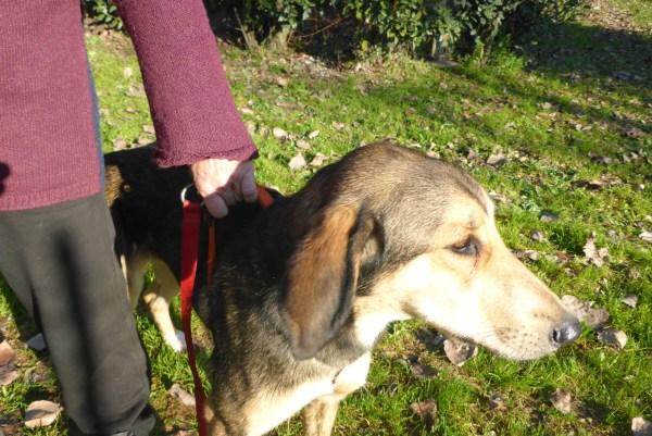 Bildertagebuch - Lisbeth, sanftes freundliches junges Hundemädchen... über andere ORGA ZUHAUSE GEFUNDEN! 27932166ml