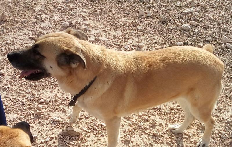 Bildertagebuch - Kiana, wunderschöne freundliche Hundedame ... eine Freundin fürs Leben - VERMITTELT! 28042639hg