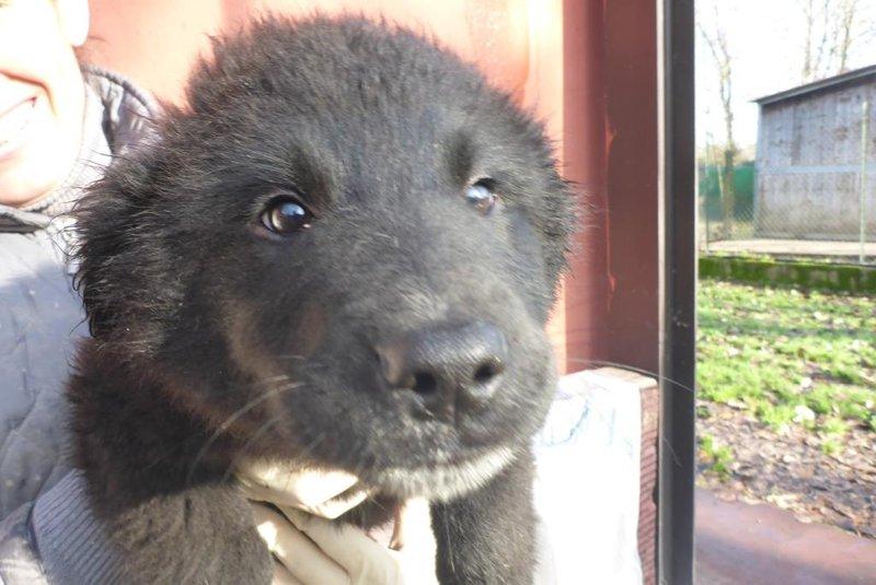 Bildertagebuch -  Loki:(noch) kleiner, schwarzer Teddy ... über andere ORGA ZUHAUSE GEFUNDEN! 28073669jz