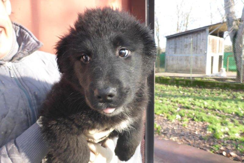 Bildertagebuch -  Loki:(noch) kleiner, schwarzer Teddy ... über andere ORGA ZUHAUSE GEFUNDEN! 28073670mw