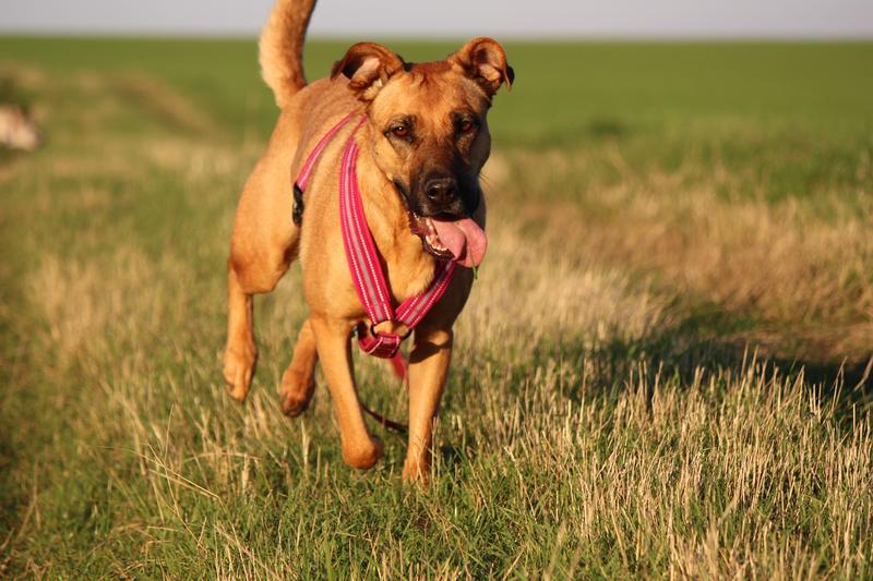 Bildertagebuch - Lina II, ein hübsche Lady die gerne Bällchen spielt und eine hundeerfahrene aktive Familie sucht ...VERMITTELT! 28079758nl