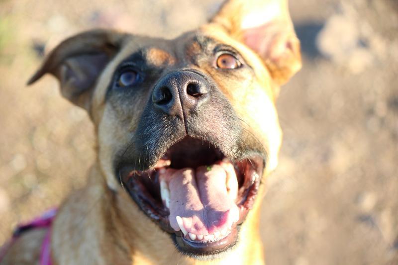 Bildertagebuch - Lina II, ein hübsche Lady die gerne Bällchen spielt und eine hundeerfahrene aktive Familie sucht ...VERMITTELT! 28079762cp