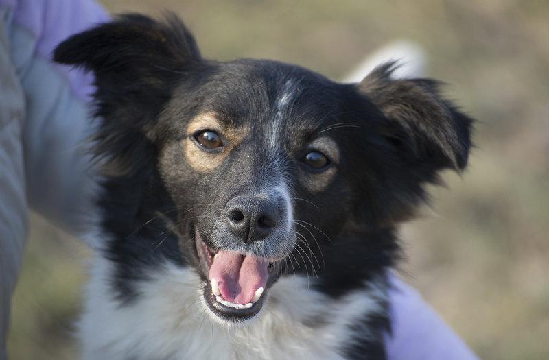 Bildertagebuch -  Dina: süßes, kleines Hundemädchen wünscht sich Familie mit Kuschelpotential - VERMITTELT! 28102683wz