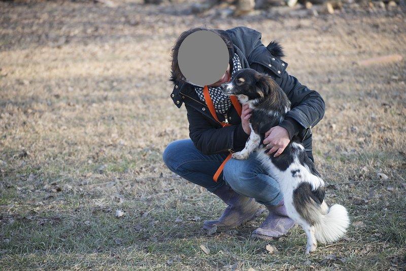 Bildertagebuch -  Dina: süßes, kleines Hundemädchen wünscht sich Familie mit Kuschelpotential - VERMITTELT! 28102687au