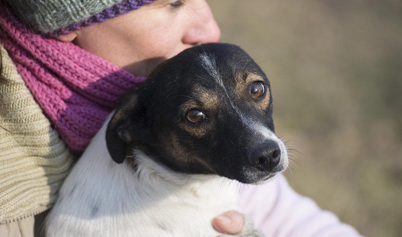 Bildertagebuch -  Virgola: niedliches, kleines Hundemädchen mit viel Witz und Charme sucht Familienanschluß! 28102696wb