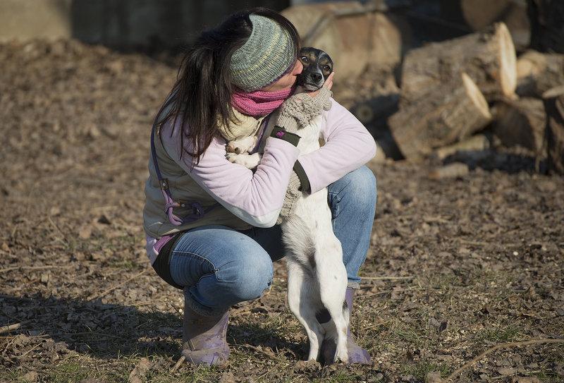 Bildertagebuch -  Virgola: niedliches, kleines Hundemädchen mit viel Witz und Charme sucht Familienanschluß! 28102698ul