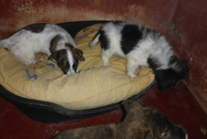 Heftiger Wintereinbruch in Italien – und auch die Hunde müssen frieren…  - NOTFELLE DOG VILLAGE (ITALIEN) 28102876ts