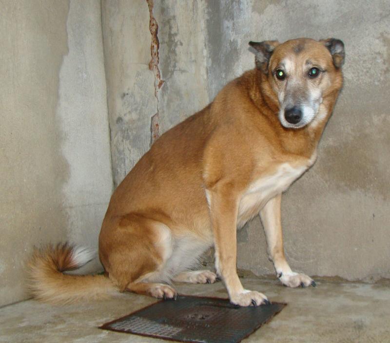 Bildertagebuch - Debra, eine schöne ältere Hundedame die vor 7 Jahren gefunden wurde und in dieser langen Wartezeit endlich ein warmes Sofa verdient hat ...VERMITTELT! 28112235yh