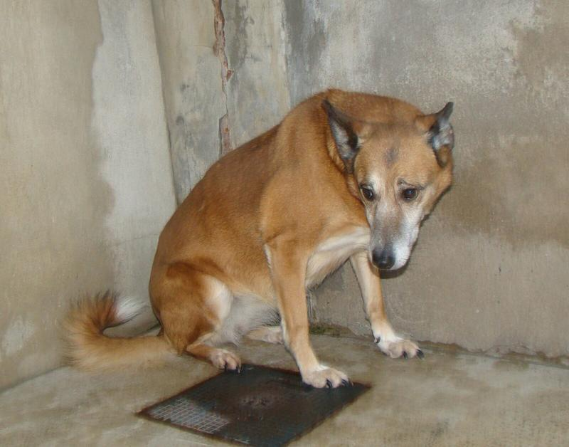 Bildertagebuch - Debra, eine schöne ältere Hundedame die vor 7 Jahren gefunden wurde und in dieser langen Wartezeit endlich ein warmes Sofa verdient hat ...VERMITTELT! 28112236gg