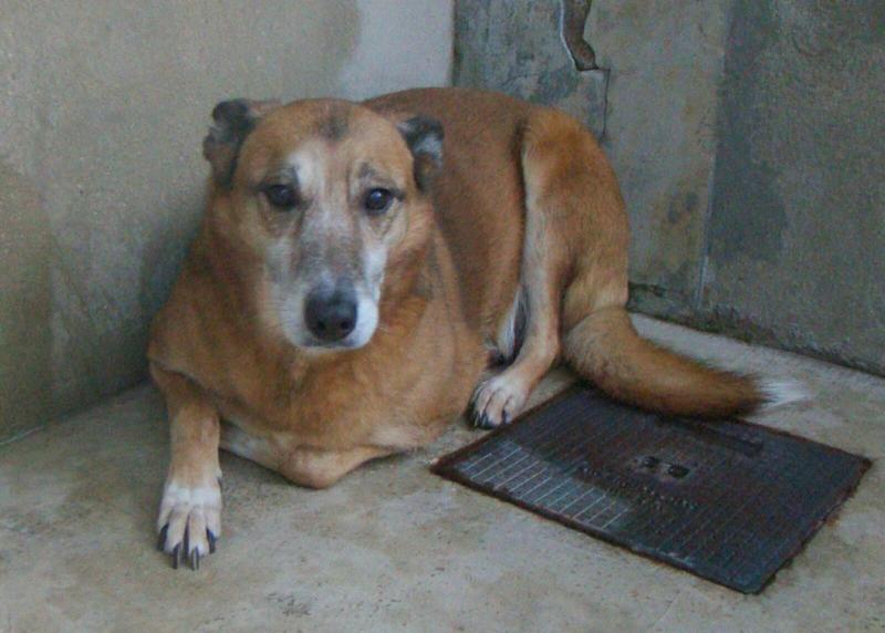 Bildertagebuch - Debra, eine schöne ältere Hundedame die vor 7 Jahren gefunden wurde und in dieser langen Wartezeit endlich ein warmes Sofa verdient hat ...VERMITTELT! 28112237km
