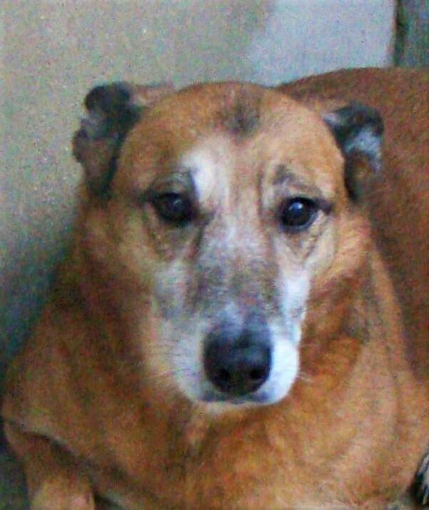 Bildertagebuch - Debra, eine schöne ältere Hundedame die vor 7 Jahren gefunden wurde und in dieser langen Wartezeit endlich ein warmes Sofa verdient hat ...VERMITTELT! 28112238gc