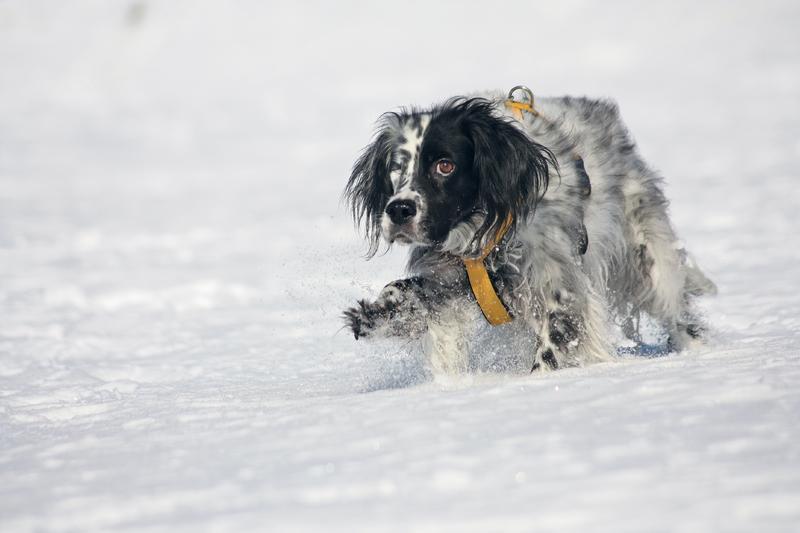 Bildertagebuch - Ginger lebt jetzt als Dauerpflegehund bei ihrer Pflegefamilie 28117185qi