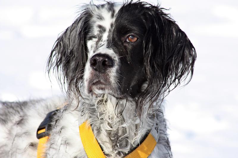 Bildertagebuch - Ginger lebt jetzt als Dauerpflegehund bei ihrer Pflegefamilie 28117199ds