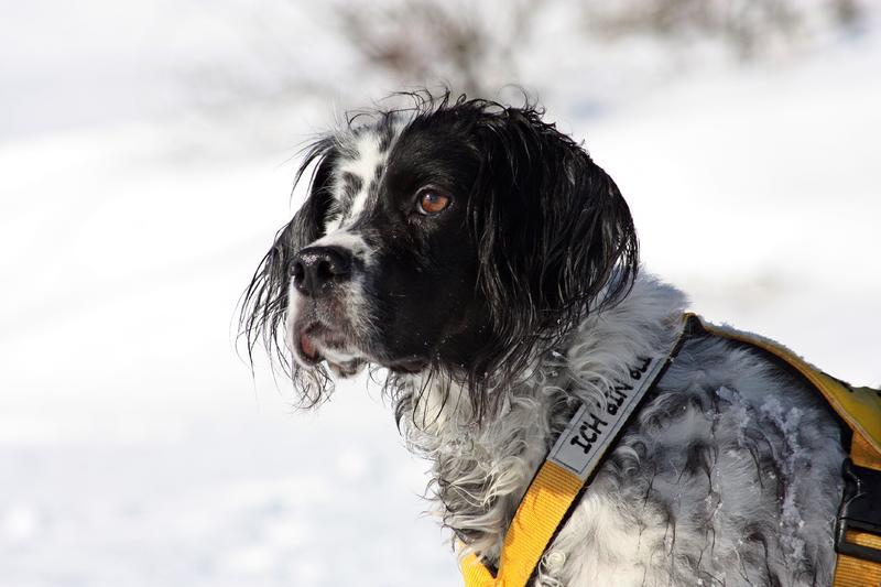 Bildertagebuch - Ginger lebt jetzt als Dauerpflegehund bei ihrer Pflegefamilie 28117200ef