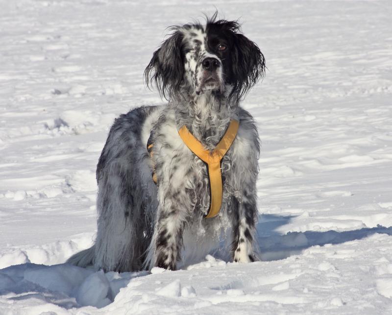 Bildertagebuch - Ginger lebt jetzt als Dauerpflegehund bei ihrer Pflegefamilie 28117201wf