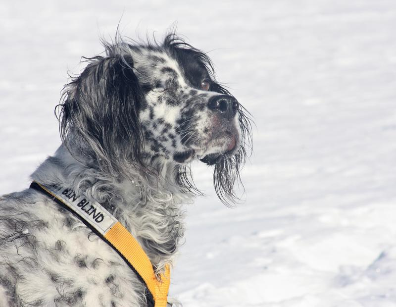 Bildertagebuch - Ginger lebt jetzt als Dauerpflegehund bei ihrer Pflegefamilie 28117216mv