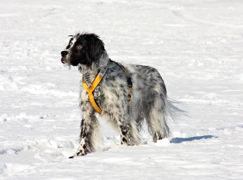 Bildertagebuch - Ginger lebt jetzt als Dauerpflegehund bei ihrer Pflegefamilie 28117217ge