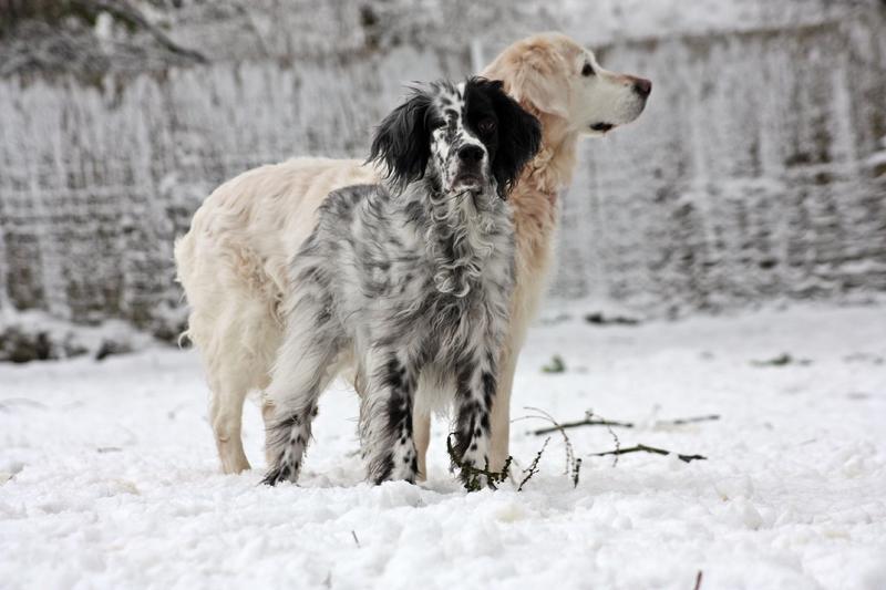 Bildertagebuch - Ginger lebt jetzt als Dauerpflegehund bei ihrer Pflegefamilie 28117248qd