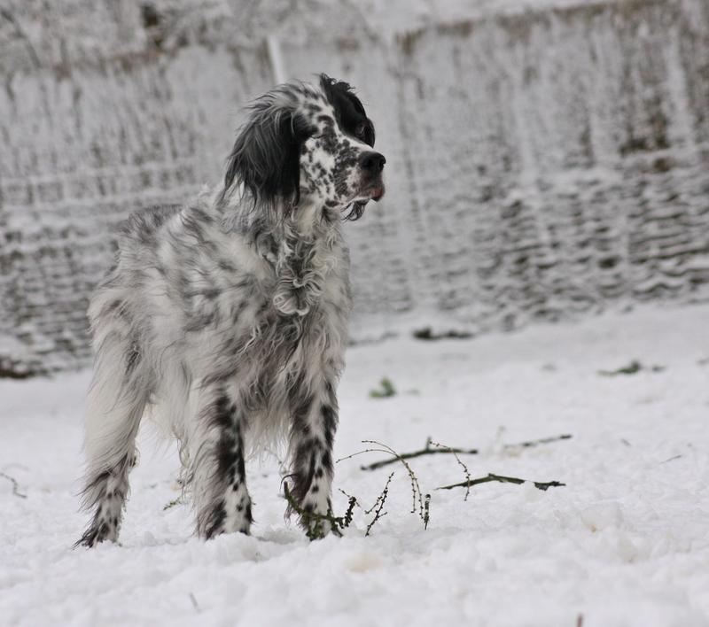 Bildertagebuch - Ginger lebt jetzt als Dauerpflegehund bei ihrer Pflegefamilie 28117249hm