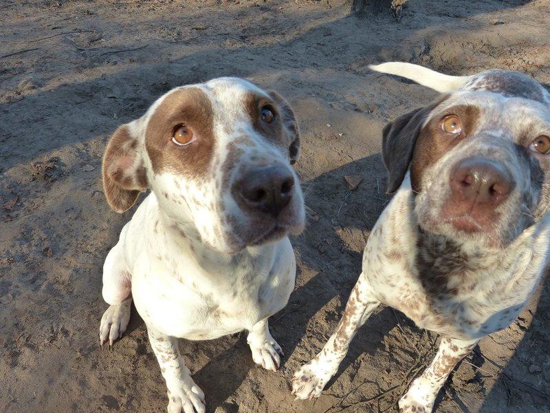 Bildertagebuch -  MARTA und MARIA kamen zusammen ins Rescue von Alicante..... 28131852ba