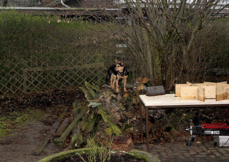 Bildertagebuch -  Gamma: Kleine Fledermaus sucht neuen Wirkungskreis- VERMITTELT! 28145614zb