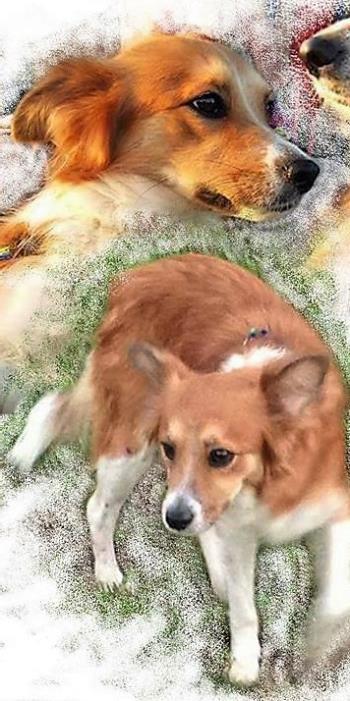 Bildertagebuch -  Sallie, eine trollige süße kleine Maus ... man hatte kein Mitleid mit der Maus sie wurde einfach auf die Straße geworfen- VERMITTELT! 28147089yu