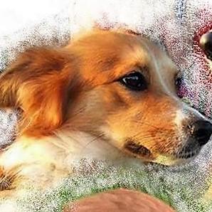 Bildertagebuch -  Sallie, eine trollige süße kleine Maus ... man hatte kein Mitleid mit der Maus sie wurde einfach auf die Straße geworfen- VERMITTELT! 28147091if