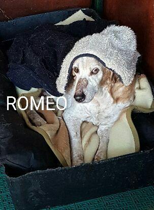 Bildertagebuch -  Romeo, ein armer Kerl der kein einfaches Leben hatte ... in ITALIEN ZUHAUSE GEFUNDEN! 28147195nt
