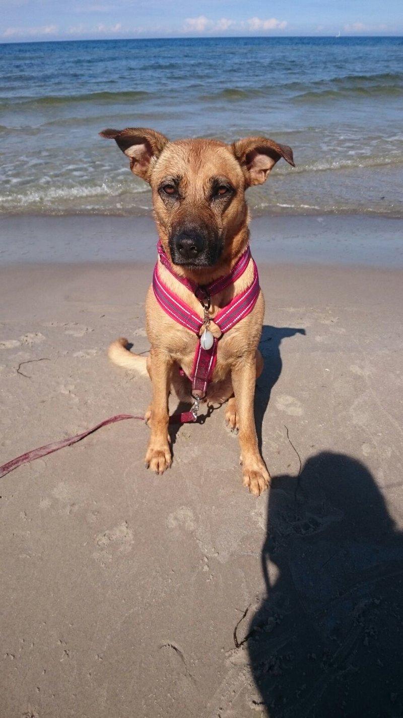 Bildertagebuch - Lina II, ein hübsche Lady die gerne Bällchen spielt und eine hundeerfahrene aktive Familie sucht ...VERMITTELT! 28345931ay
