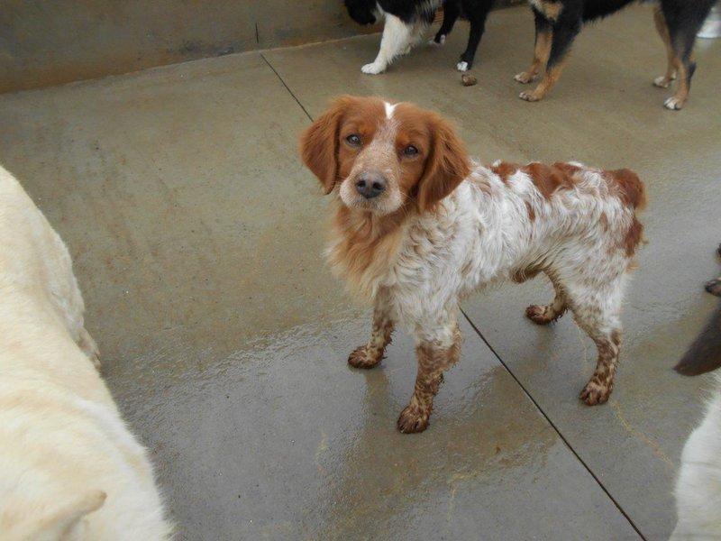 Bildertagebuch - Figo: ein SUPER- Familienhund - VERMITTELT! 28377065sa