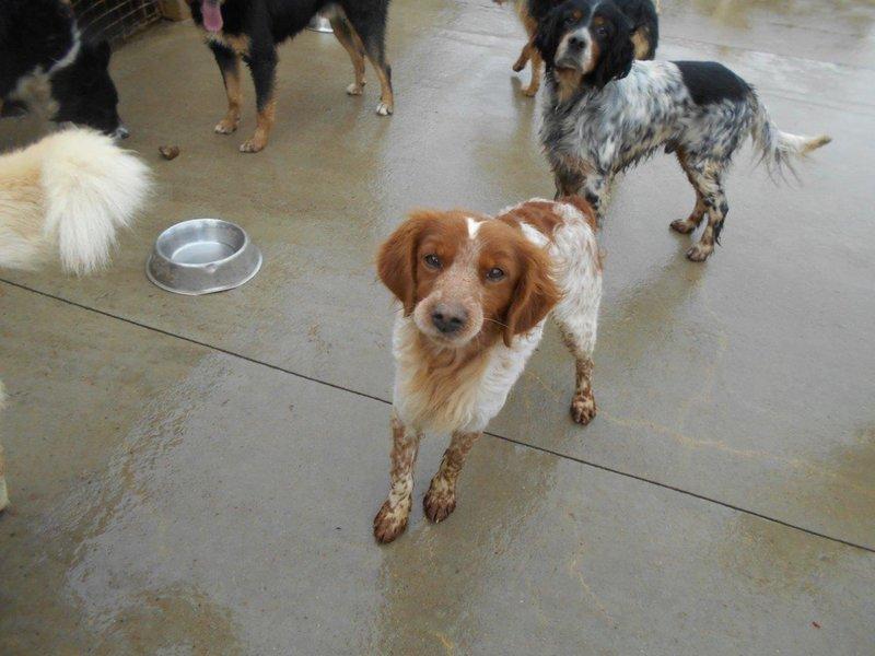 Bildertagebuch - Figo: ein SUPER- Familienhund - VERMITTELT! 28377066rc