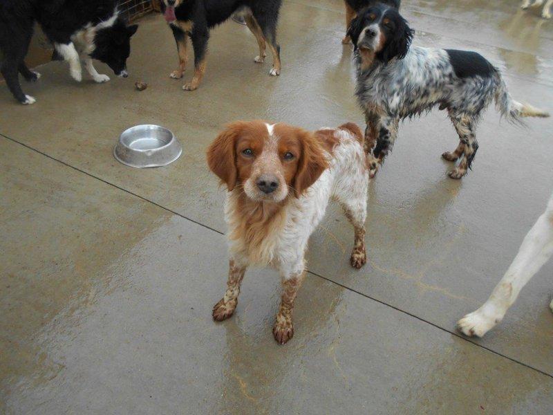 Bildertagebuch - Figo: ein SUPER- Familienhund - VERMITTELT! 28377067rd