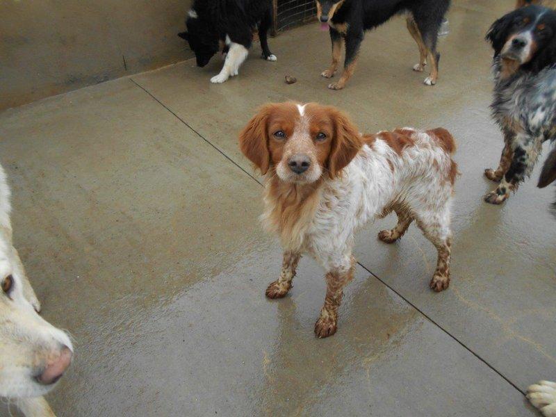 Bildertagebuch - Figo: ein SUPER- Familienhund - VERMITTELT! 28377069gx