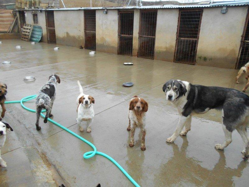 Bildertagebuch - Figo: ein SUPER- Familienhund - VERMITTELT! 28377073nf