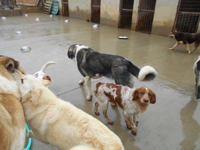 Bildertagebuch - Figo: ein SUPER- Familienhund - VERMITTELT! 28377074wx