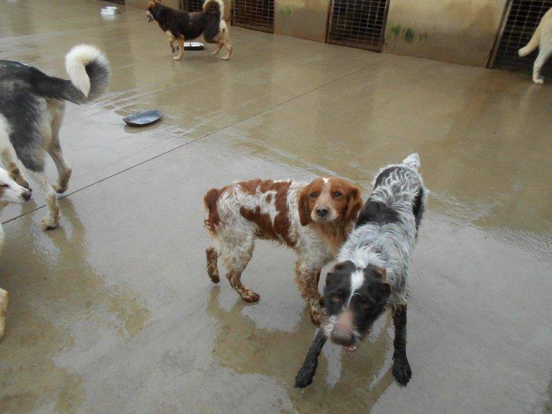 Bildertagebuch - Figo: ein SUPER- Familienhund - VERMITTELT! 28377075ze